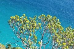 Fiori davanti al mare Immagini Stock
