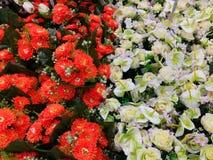 Fiori decorativi arancio e bianchi Fotografia Stock Libera da Diritti