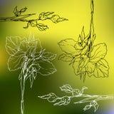 Fiori decorativi in bianco e nero dell'iride di vettore del profilo royalty illustrazione gratis