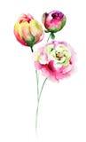 Fiori decorativi di estate royalty illustrazione gratis