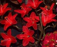 Fiori decorativi rossi con la lampadina Fotografia Stock Libera da Diritti