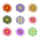Fiori dei colori differenti Royalty Illustrazione gratis
