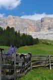 Fiori dei lupini in dolomia Val Badia Alta Badia Fotografia Stock Libera da Diritti