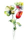 Fiori dei tulipani di estate Fotografie Stock Libere da Diritti