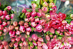 Fiori dei tulipani di Rosa da vendere Fotografia Stock