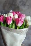 Fiori dei tulipani in primavera Immagine Stock