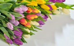 Fiori dei tulipani su fondo bianco Fotografie Stock