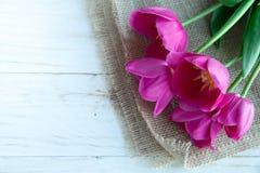 Fiori dei tulpes della primavera su fondo di legno bianco Fotografie Stock Libere da Diritti