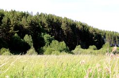 Fiori del bel tempo della foresta del campo del paesaggio di estate Fotografia Stock Libera da Diritti