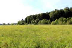 Fiori del bel tempo della foresta del campo del paesaggio di estate Fotografia Stock
