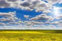 Fiori del Canola con cielo blu ed il sole Immagine Stock
