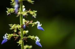 Fiori del colibrì Fotografie Stock
