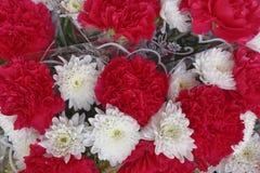 Fiori del crisantemo e del garofano Fotografia Stock