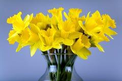 Fiori del Daffodil immagine stock libera da diritti