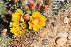 Fiori del deserto Fotografia Stock Libera da Diritti