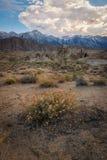 Fiori del deserto alle colline dell'Alabama Fotografia Stock