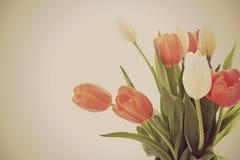 Fiori del fondo del tulipano immagini stock libere da diritti