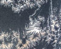 Fiori del ghiaccio su vetro immagini stock