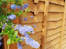 Fiori del giardino immagine stock