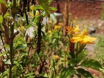 Fiori del giardino Immagini Stock