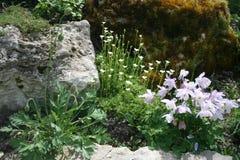 Fiori del giardino fotografia stock libera da diritti