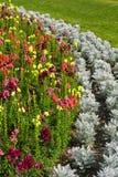 Fiori del giardino Fotografie Stock Libere da Diritti