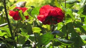 Fiori del giardino Immagini Stock Libere da Diritti