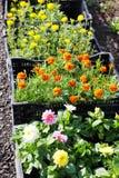Fiori del giardino da vendere Immagini Stock Libere da Diritti