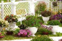 Fiori del giardino dei colori differenti in vasi Fotografie Stock Libere da Diritti