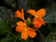 Fiori del giardino del campo da giuoco del ` s della natura Fotografie Stock Libere da Diritti