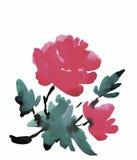 Fiori del giardino dell'acquerello isolati su fondo bianco, illustrazione di vettore di stile giapponese Fotografia Stock Libera da Diritti