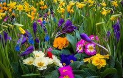 Fiori del giardino della primavera Fotografie Stock