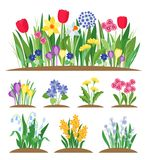 Fiori del giardino della primavera Erba e pianta Vettore di fioritura della molla in anticipo illustrazione di stock