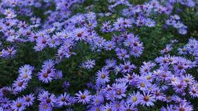 Fiori del giardino di autunno archivi video
