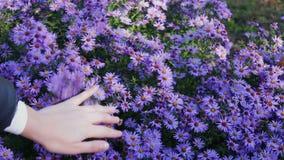 Fiori del giardino di autunno video d archivio