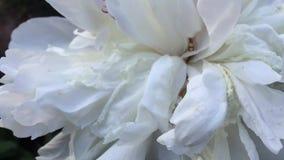 Fiori del giardino di estate video d archivio