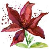 Fiori del giardino di estate Illustrazione dell'acquerello Fotografia Stock Libera da Diritti