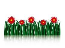 Fiori del giardino e campo di erba illustrazione di stock