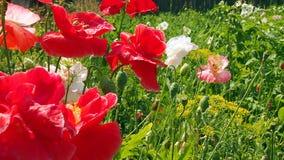 Fiori del giardino e del campo Immagini Stock Libere da Diritti
