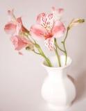 Fiori del giglio di Alstroemeria in vaso Immagini Stock