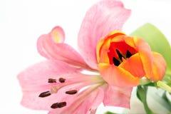 Fiori del giglio e del tulipano Fotografia Stock Libera da Diritti