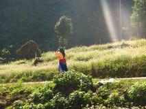 Fiori del grano saraceno del fiore Immagine Stock Libera da Diritti