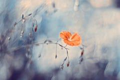 Fiori del lino su un bello fondo Immagine artistica con bella tonalità Fuoco selettivo Immagini Stock
