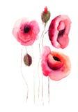 Fiori del papavero, illustrazione dell'acquerello Fotografia Stock Libera da Diritti