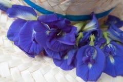 Fiori del pisello di farfalla Fotografia Stock