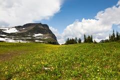 Fiori del prato con la montagna Fotografia Stock Libera da Diritti