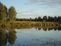 Fiori del prato nella foresta di estate Immagini Stock Libere da Diritti