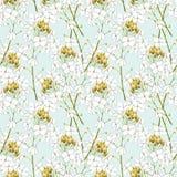 Fiori del rafano dell'acquerello Reticolo senza giunte Illustrazione botanica di organico, pianta di eco Illustrazione per alimen royalty illustrazione gratis