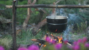 Fiori del rododendro con il falò video d archivio