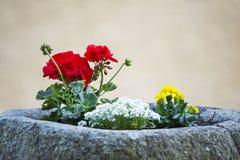 Fiori del tagete e del geranio conservati in vaso in un costo di pietra Fotografia Stock
